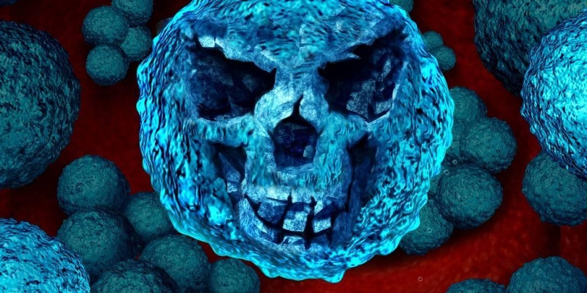 El hongo que asusta al mundo y que sería producto del aumento de las temperaturas