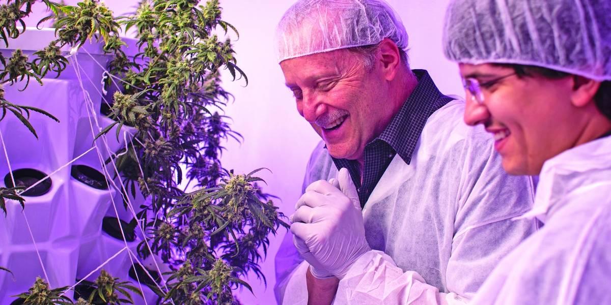 Suman esfuerzos de educación sobre cannabis
