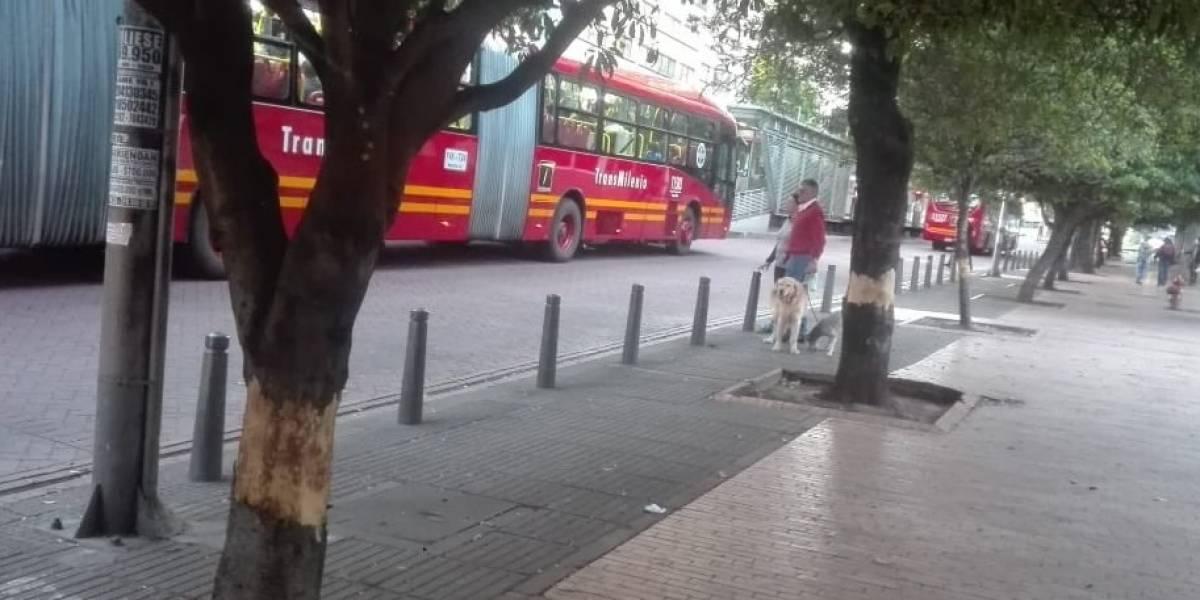 Árboles en el Eje Ambiental habrían sido vandalizados y estarían en riesgo