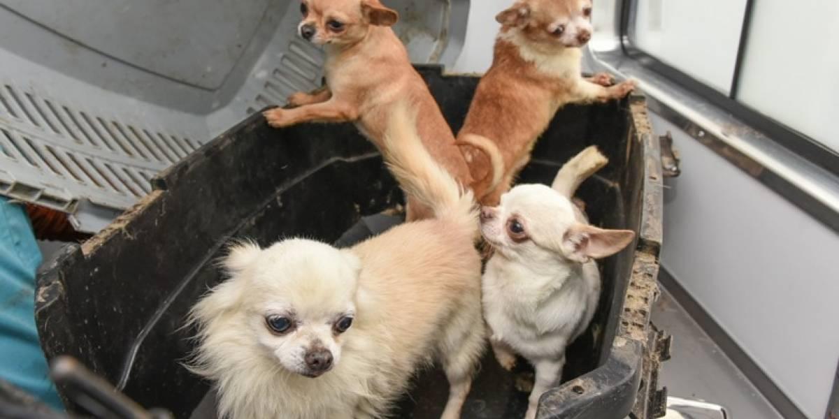 Tres gatos, 68 perritos y siete pájaros buscan a sus dueños: publican listado de animales recuperados de criadero ilegal en Providencia