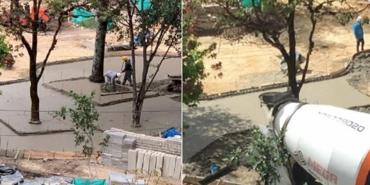 (FOTOS) Polémica en el parque Japón por, supuestamente, cemento en bases de árboles