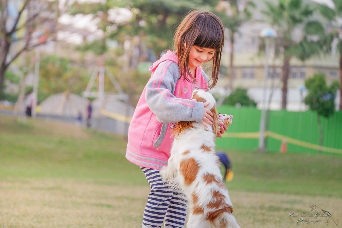 Puedes disfrutar del verano con tu familia y mascotas Cortesia