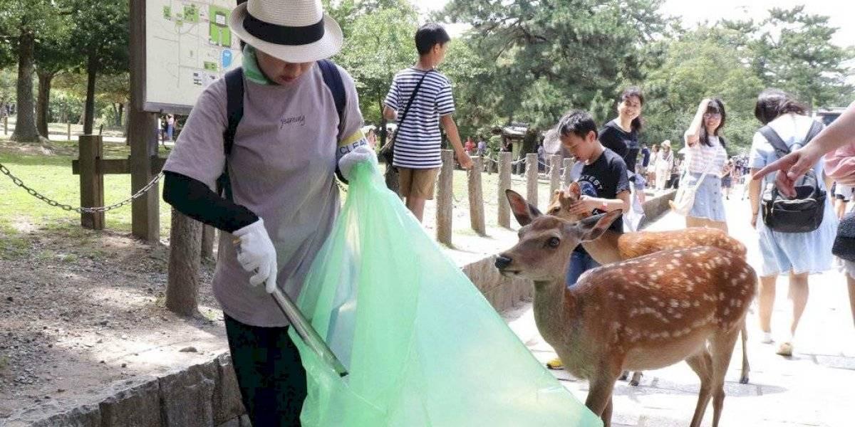 Horrible muerte por culpa de los humanos: nueve ciervos pierden la vida desnutridos tras comer plásticos