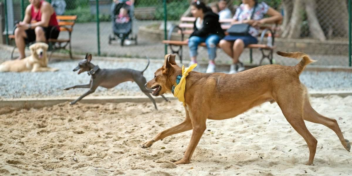 Parques de São Paulo disponibilizam locais seguros para donos levarem cachorros