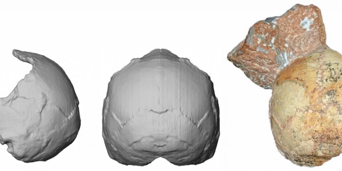 ¡Histórico! Identifican el Homo sapiens no africano más antiguo