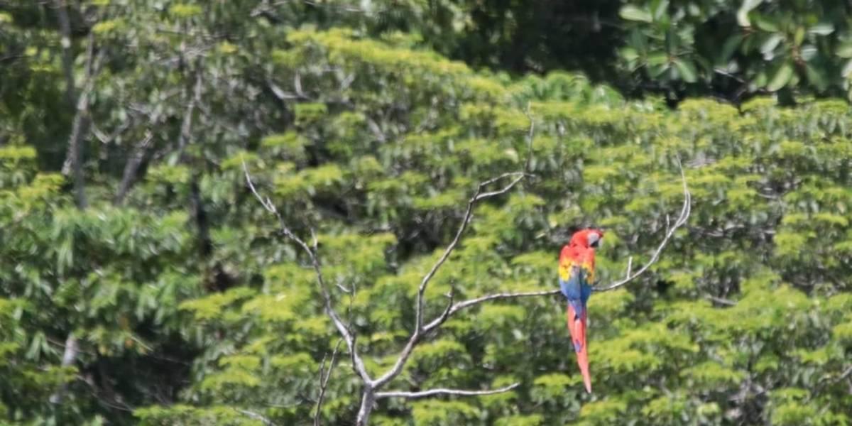 Liberan a guacamayas nacidas en programa de reproducción de la especie