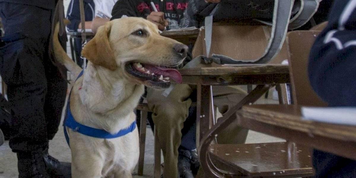 Perros no serán sacrificados por transición de la PF a Guardia Nacional, aclaran