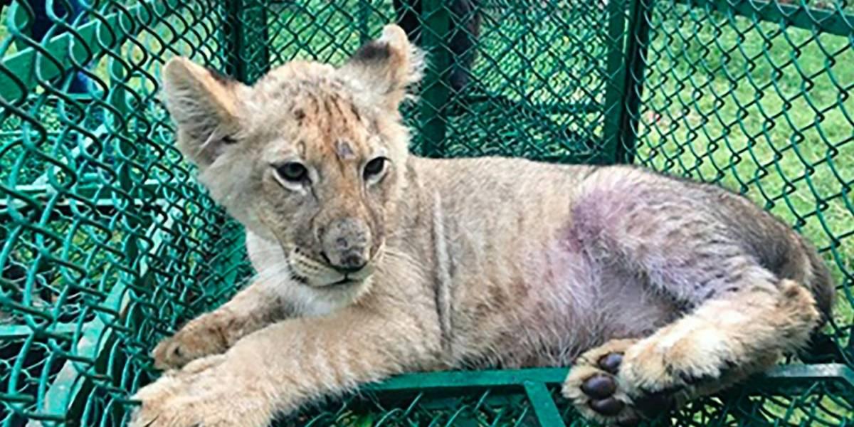 Decomisan miles de animales salvajes tras operativo mundial