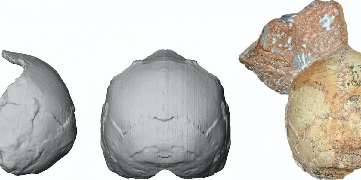 Reportan fósil humano en Grecia de hace 210,000 años