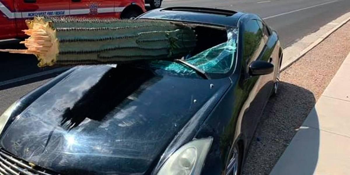 Cactus atraviesa auto en Arizona