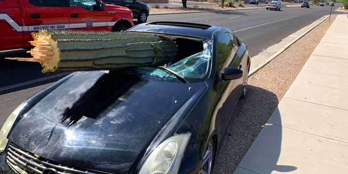 El conductor se salvó de milagro: la singular postal tras accidente que dejó a enorme cactus atravesando parabrisas de un automóvil
