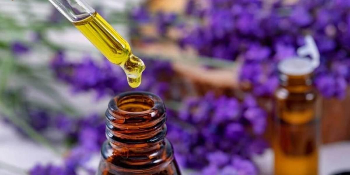 Aromaterapia e óleos essenciais: contraindicações exigem cuidados