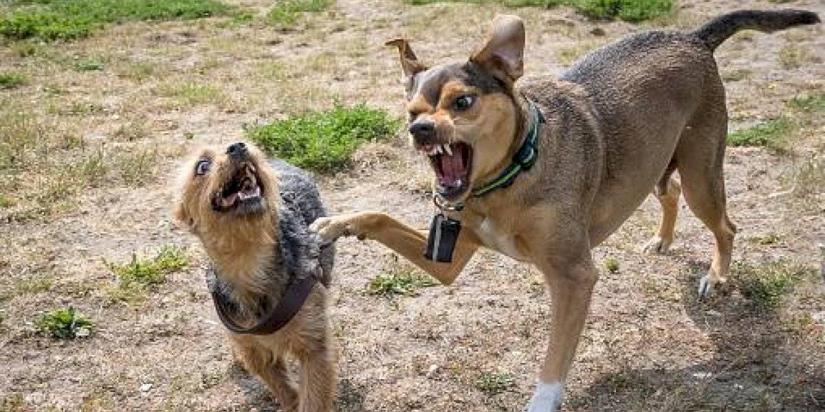 Hombre desaparecido en Texas fue comido por sus perros