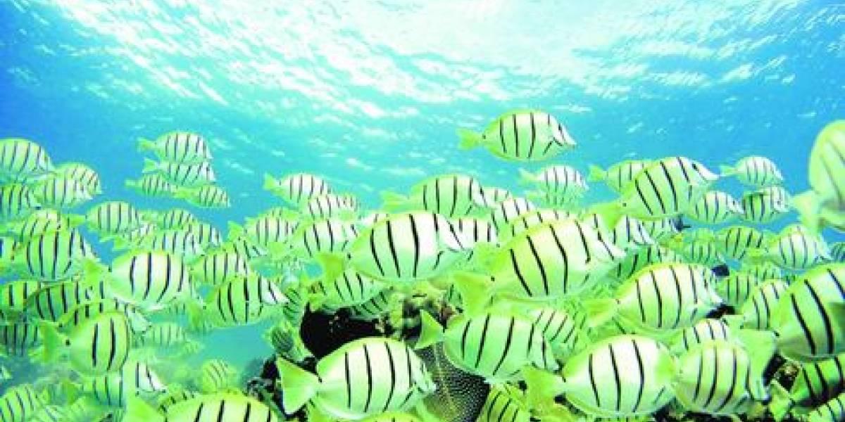Revelan que los peces no se comunican ni sonríen pero sufren