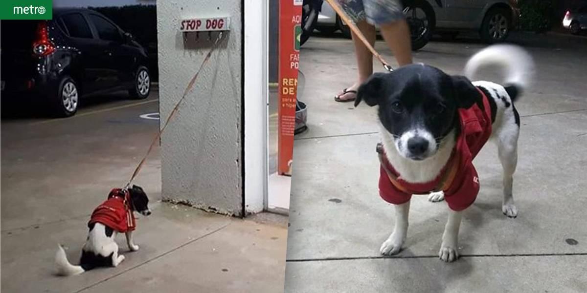 Cadelinha deixada na porta de farmácia comove moradores e ganha novo lar