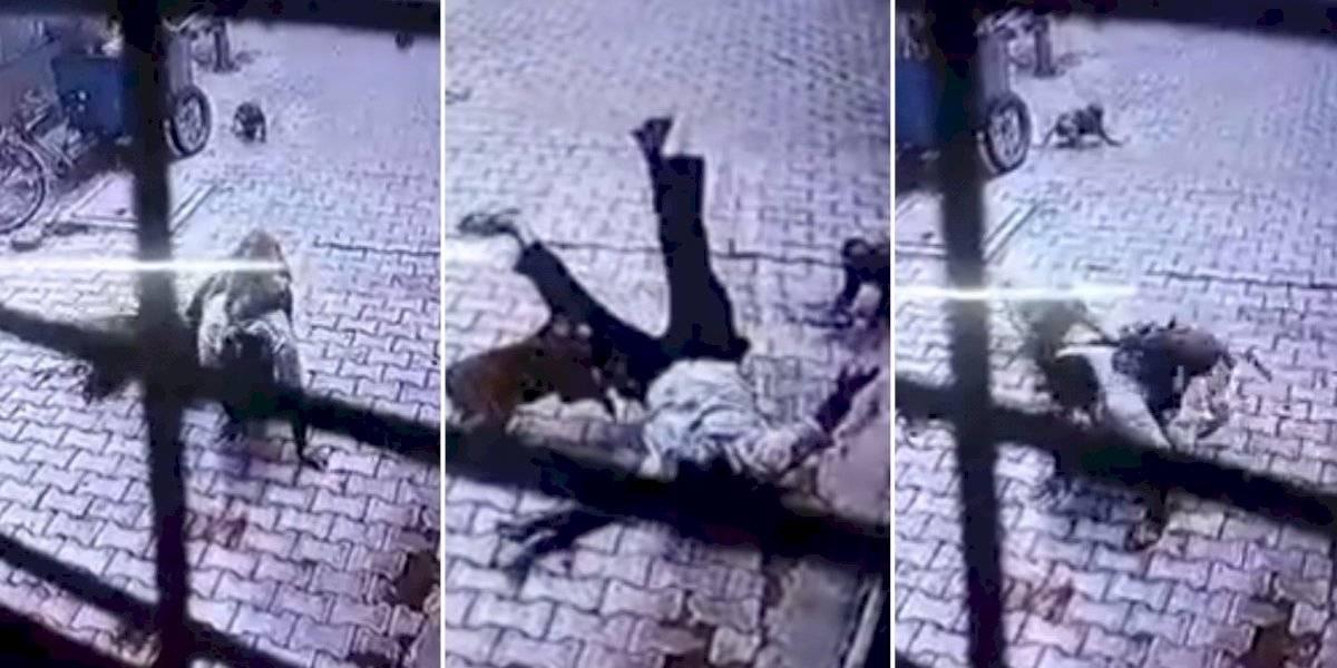 Homem é atacado por 'gangue de macacos' na Índia; câmeras de segurança registram momento desesperador