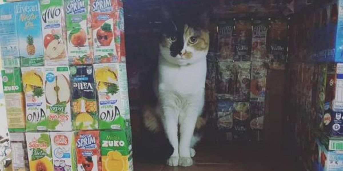 Jovem cria casa para animais de rua com embalagens de suco e fita adesiva