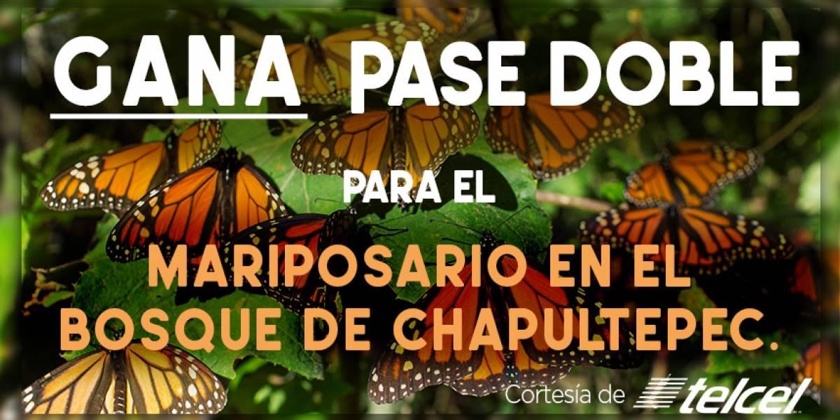 ¡Gana! pase doble para el Mariposario en el Bosque de Chapultepec