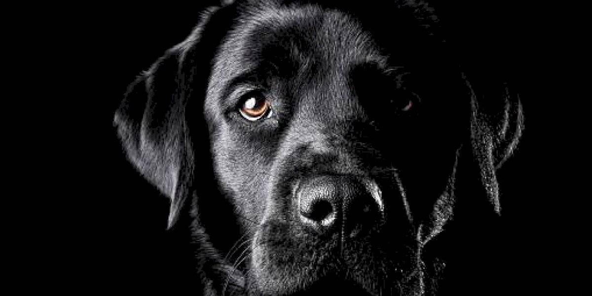 Municipio de Quito se pronuncia tras envenenamiento a perros