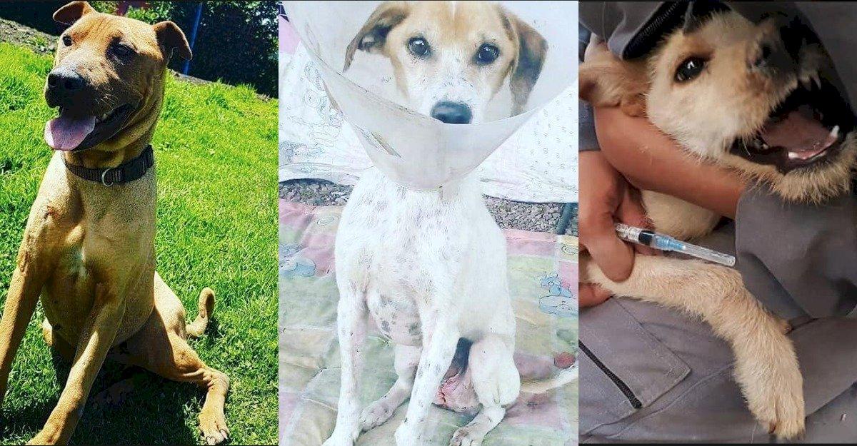 Perros envenenados en Quito Metro Ecuador