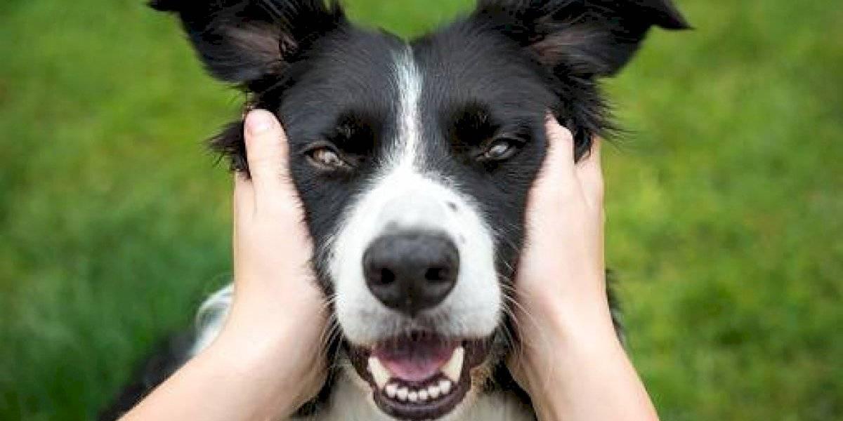 Perros envenenados en Quito: Así puedes ayudar a los refugios perjudicados