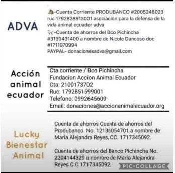 Donaciones para refugios afectados en Quito
