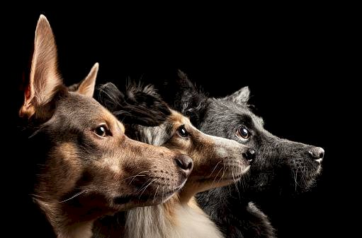 Perros (Referencial) Getty Images