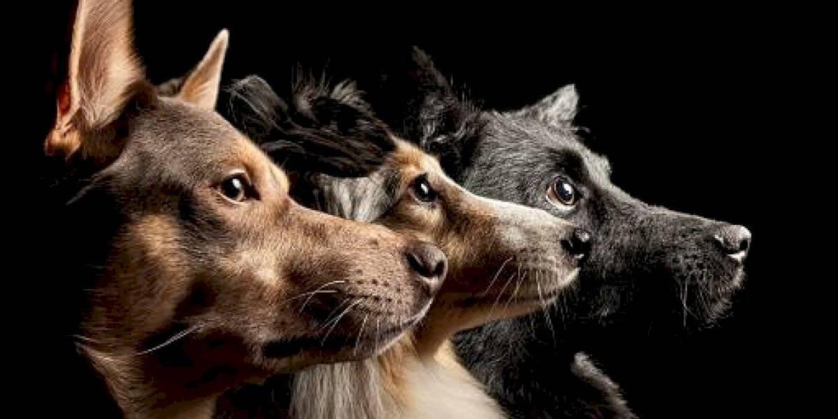 Jorge Yunda se pronuncia tras envenenamiento masivo de perros en Quito