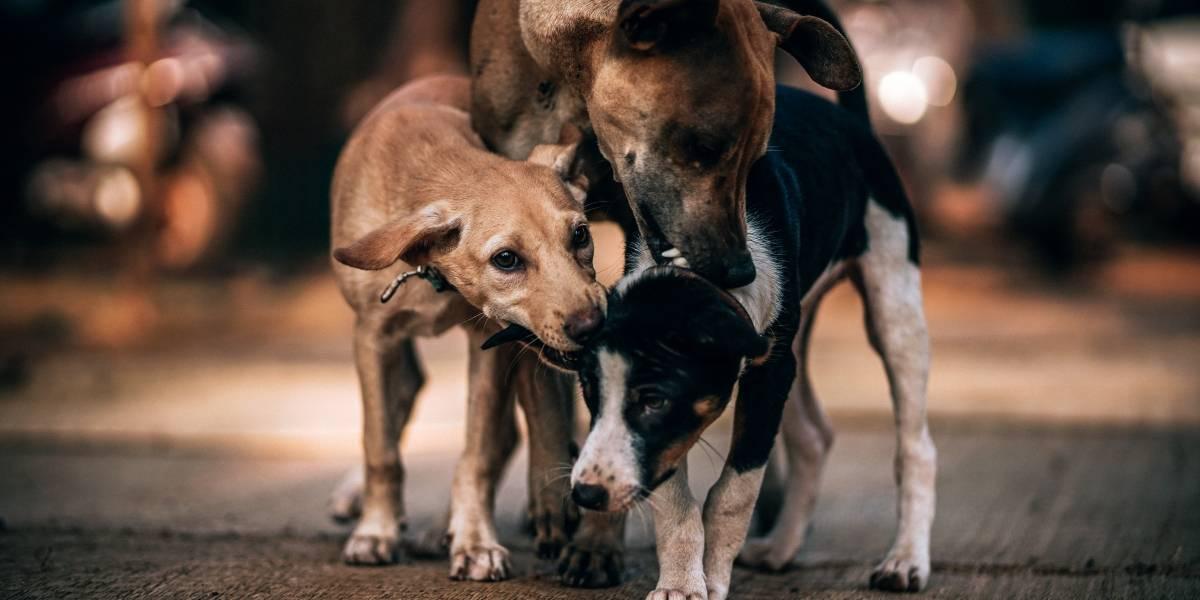 Ofrecen recompensa por información de los responsables del envenenamiento en refugios de perros