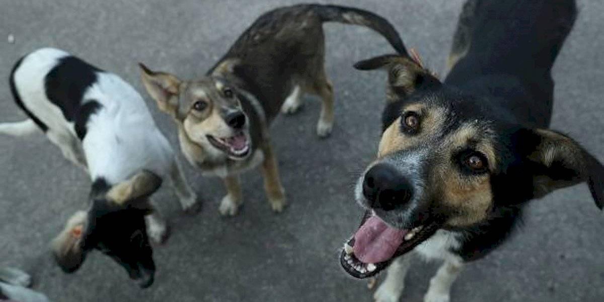 Veneno preparado habría sido lo que mató a 32 perros en los refugios de animales