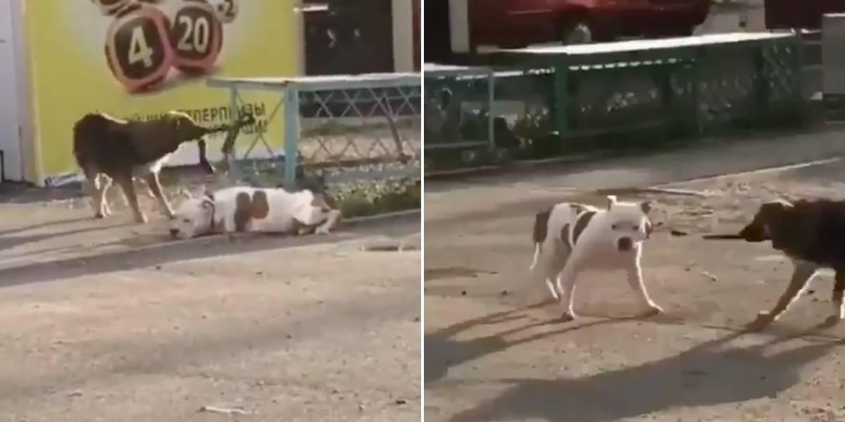 """(Video) Peludito callejero """"libera"""" a otro perrito que se encontraba amarrado y se lo lleva de paseo"""