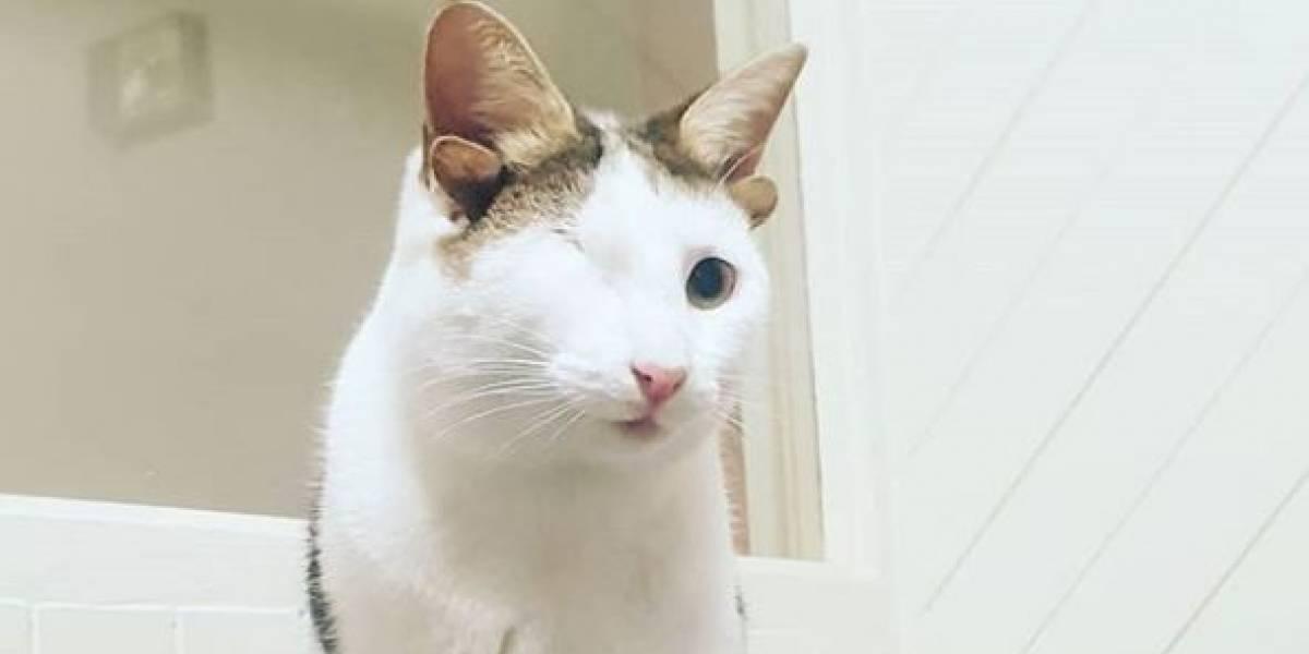 La conmovedora historia del gatito rescatado con cuatro orejas y un solo ojo