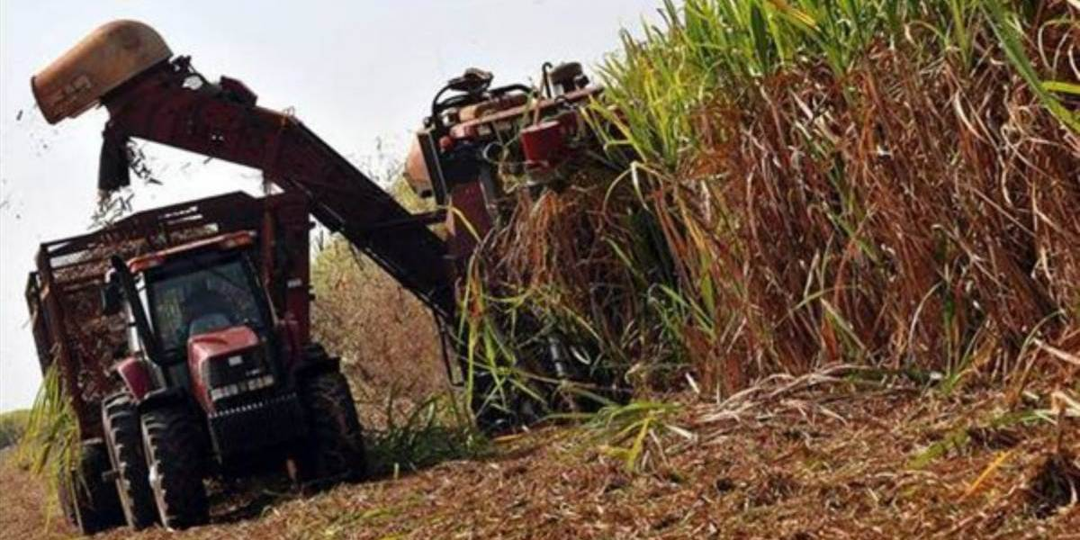 Producción azucarera de Guatemala creció 7.7% en última zafra