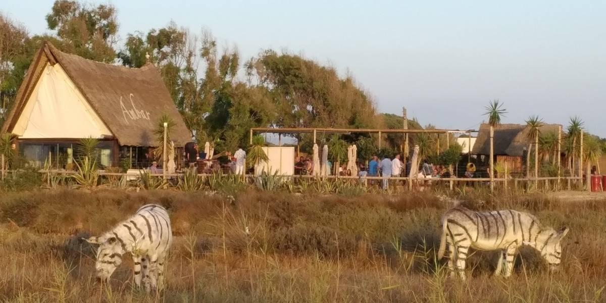 No tenían cebras y buscaron la peor solución: parque safari recibe brutal troleo por pintar un par de burros
