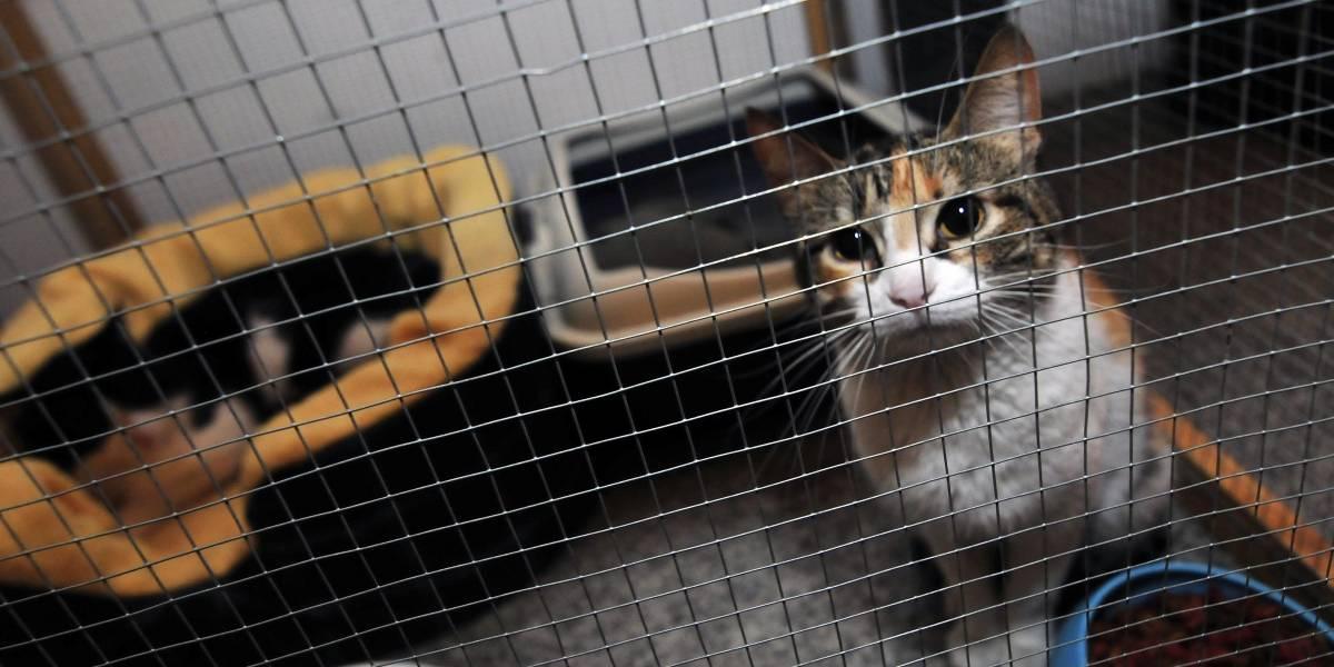 Zoofilia en Quilpué: mujer denunció que su gata fue violada por un vecino