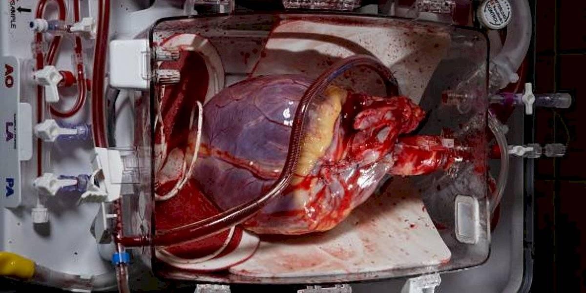 Realmente fascinante: descubre célula en nuestro cuerpo que es capaz de reparar corazones dañados