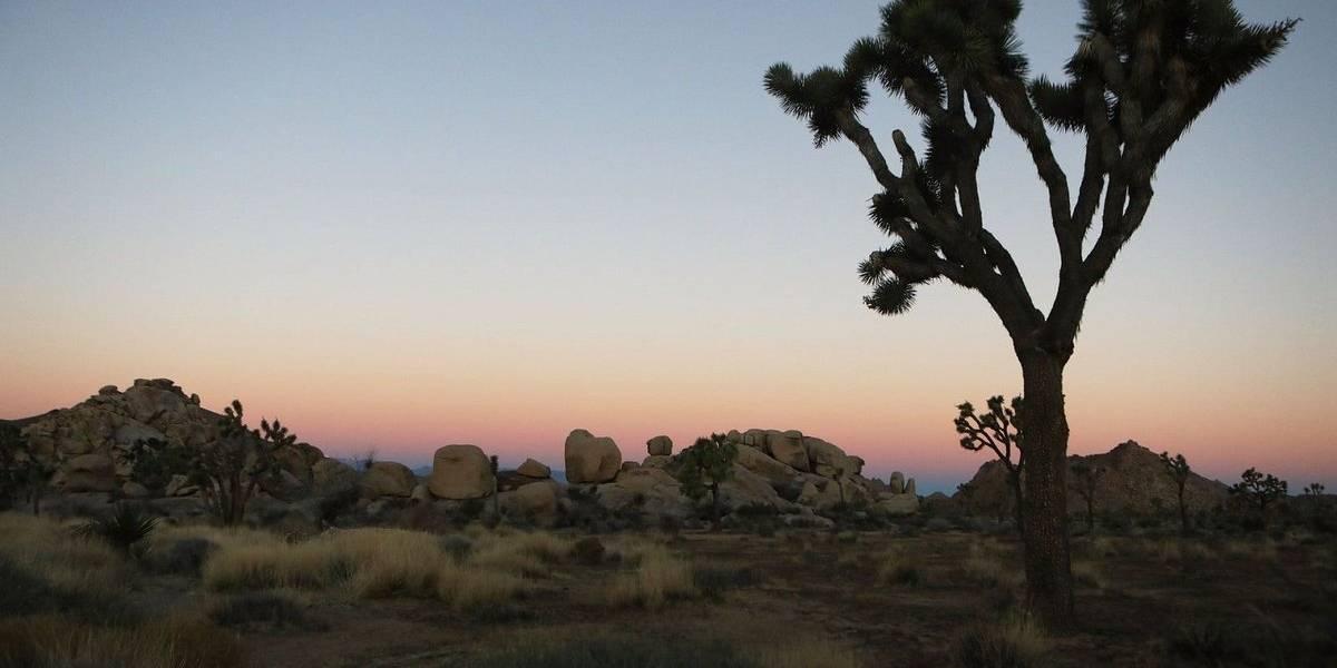 Icónicos árboles del Parque Nacional Joshua Tree en California podrían desaparecer por el cambio climático
