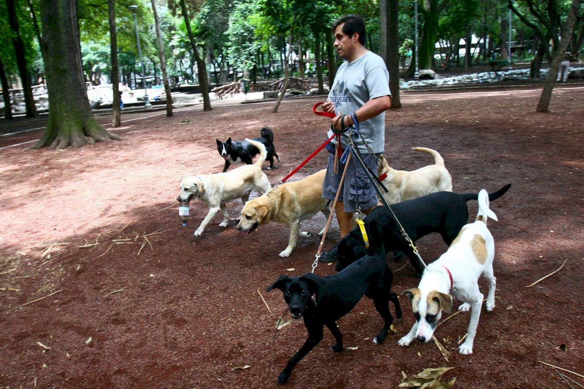 Carlos González, paseador de perros CDMX