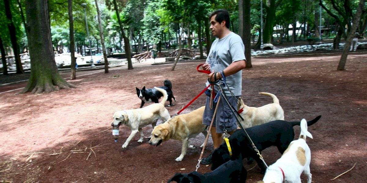 Paseadores de perros, un trabajo bien remunerado en CDMX