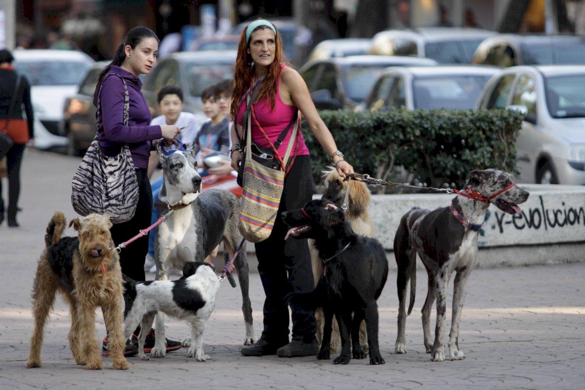 Paseador de perros CDMX