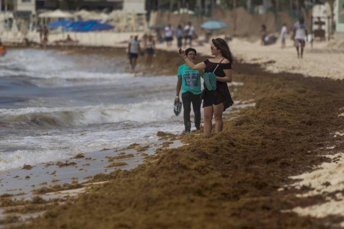 Playas del caribe mexicano llenas de sargazo Foto: Cuartoscuro