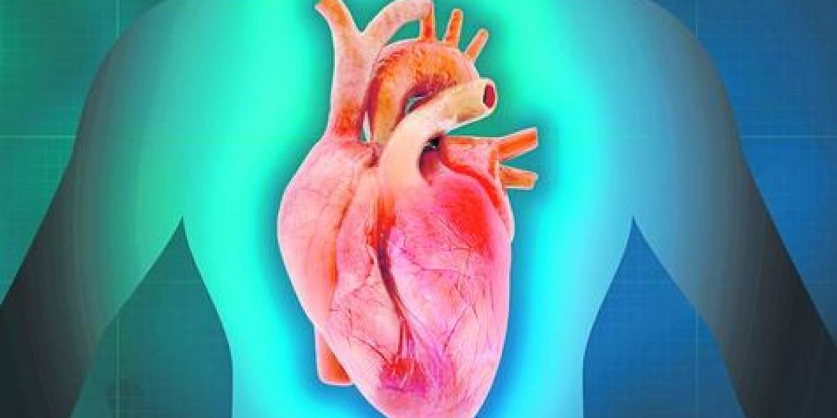 Descubren una célula en nuestro cuerpo que puede reparar el corazón
