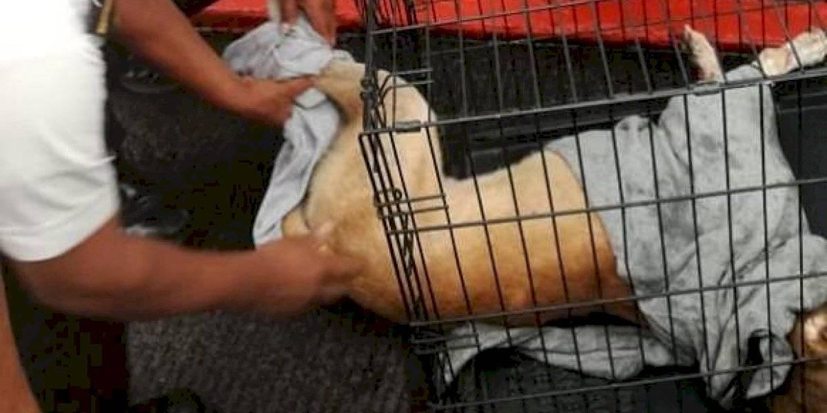 ¡Rescate canino! Un perro es sacado del fondo de un río por agentes policiales