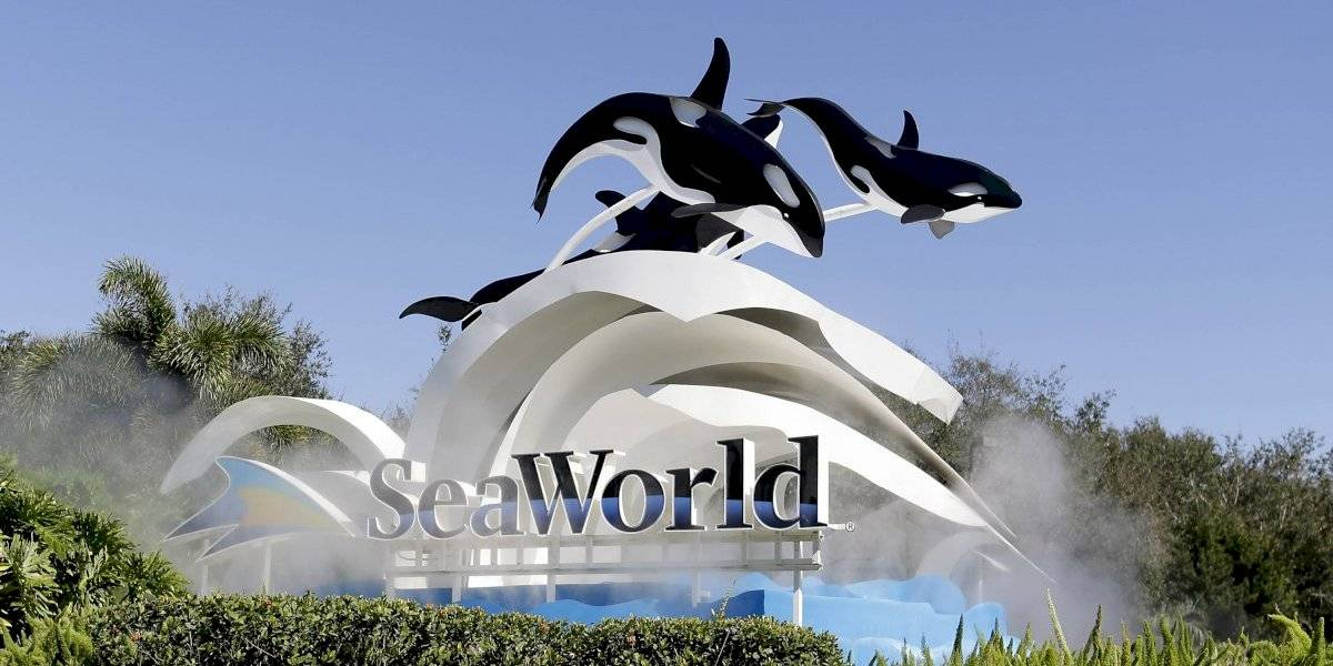 Denuncian que ballenas en SeaWorld pasan hambre y son drogadas para calmarlas