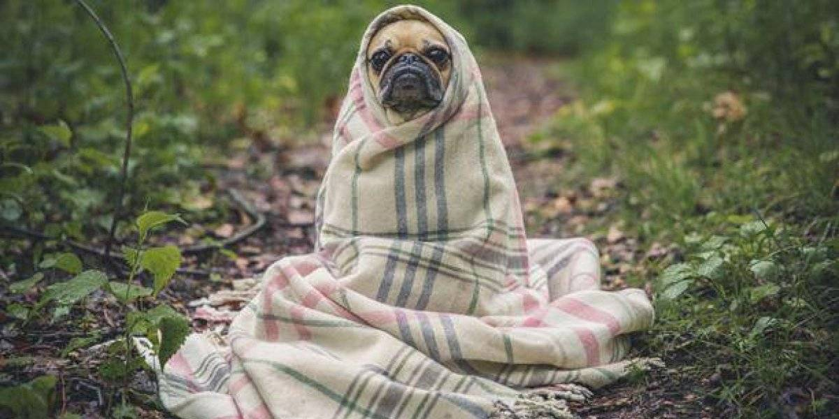 Tal vez caiga nieve: ¿Cómo proteger a las mascotas del frío?
