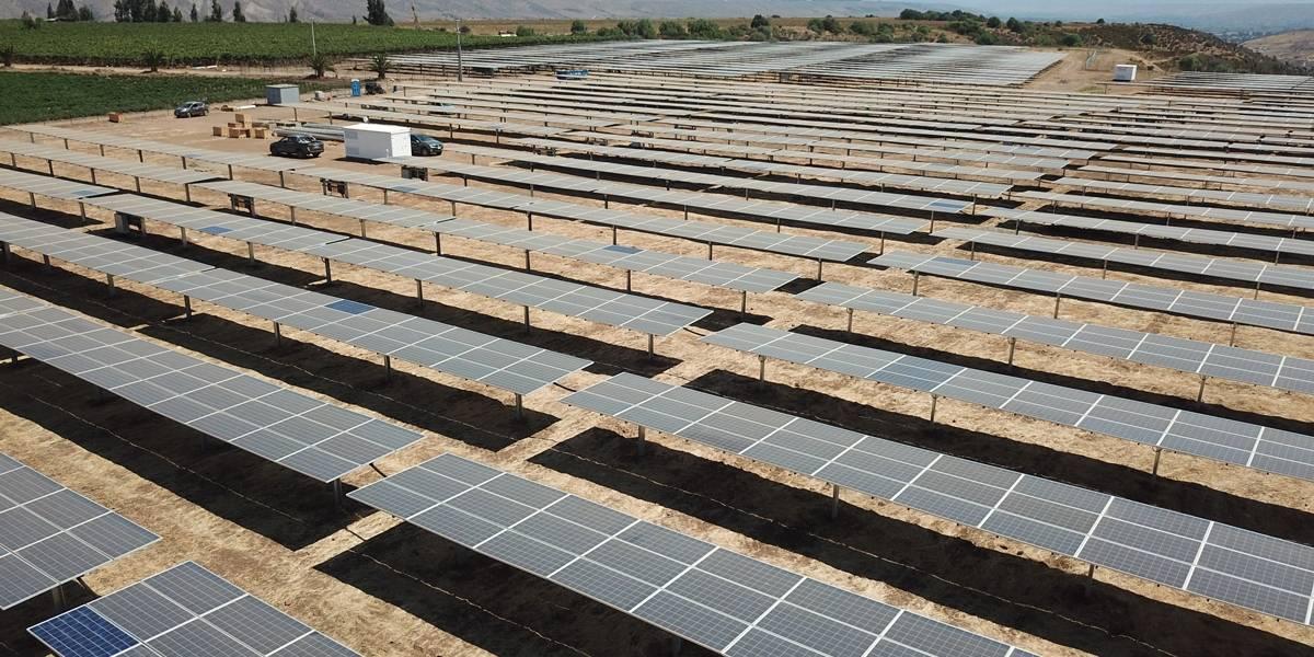 Más que energía limpia: plantas de energía solar emergen como posible entorno de preservación para las abejas