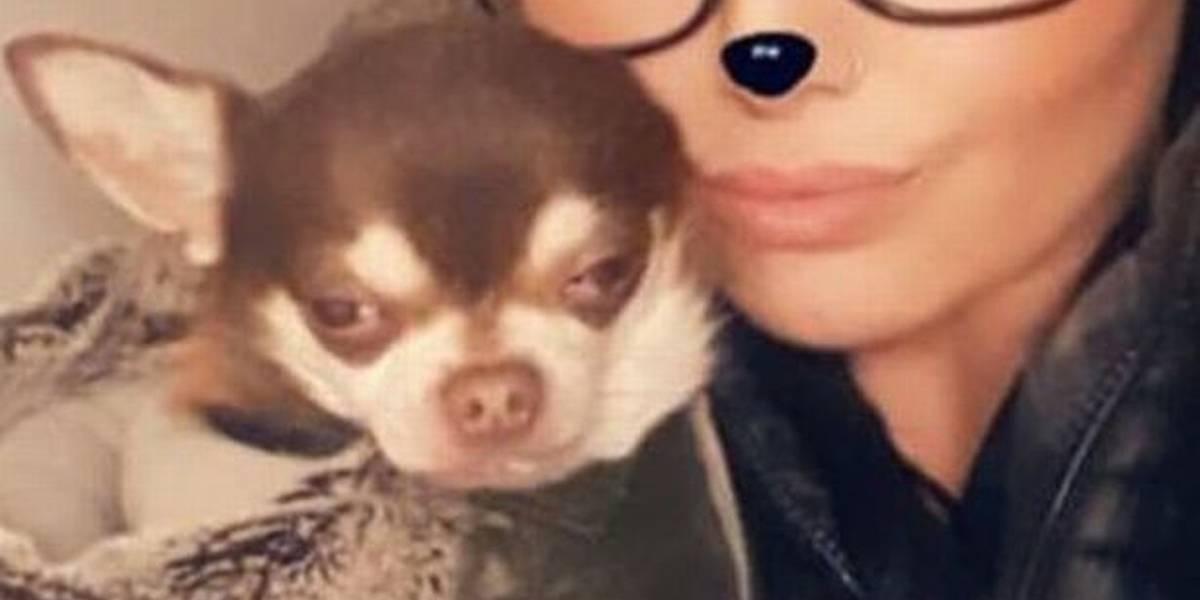 Família relata desaparecimento de cachorro: 'uma gaivota o levou'