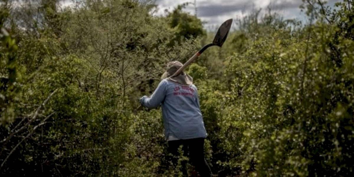 México, el sexto país más letal para defensores del medio ambiente