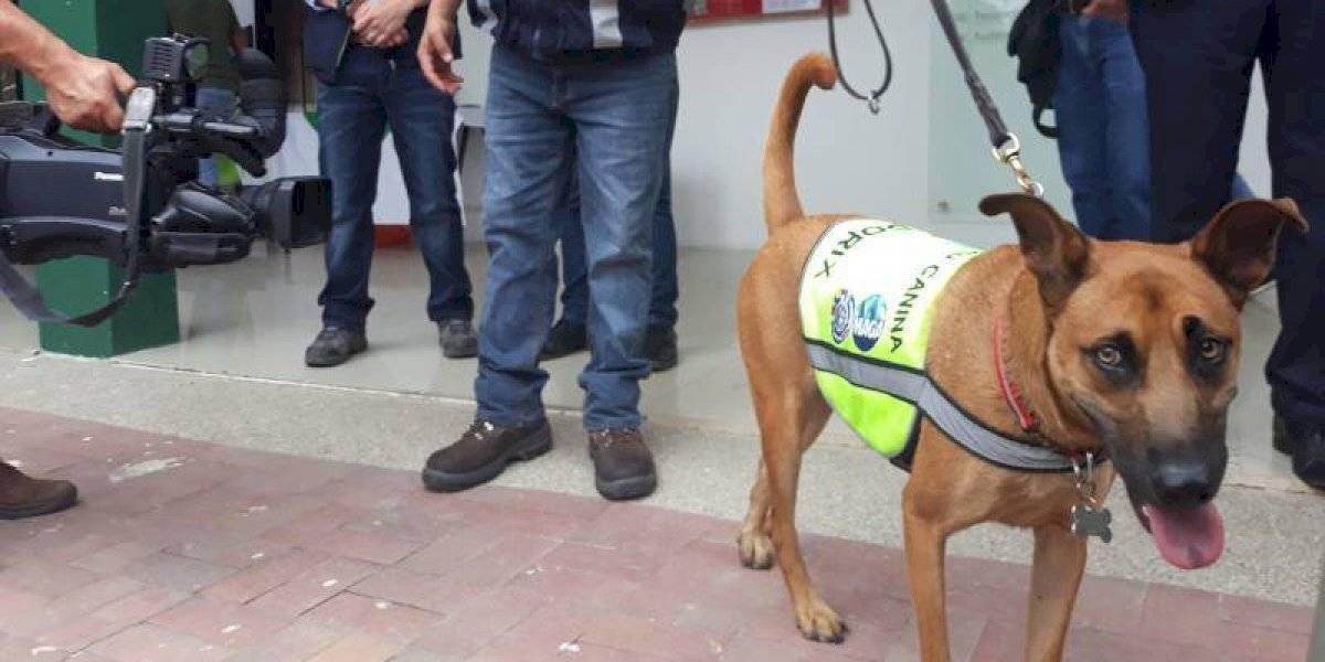 Canes llegaron a Ecuador para prevenir la plaga en el banano