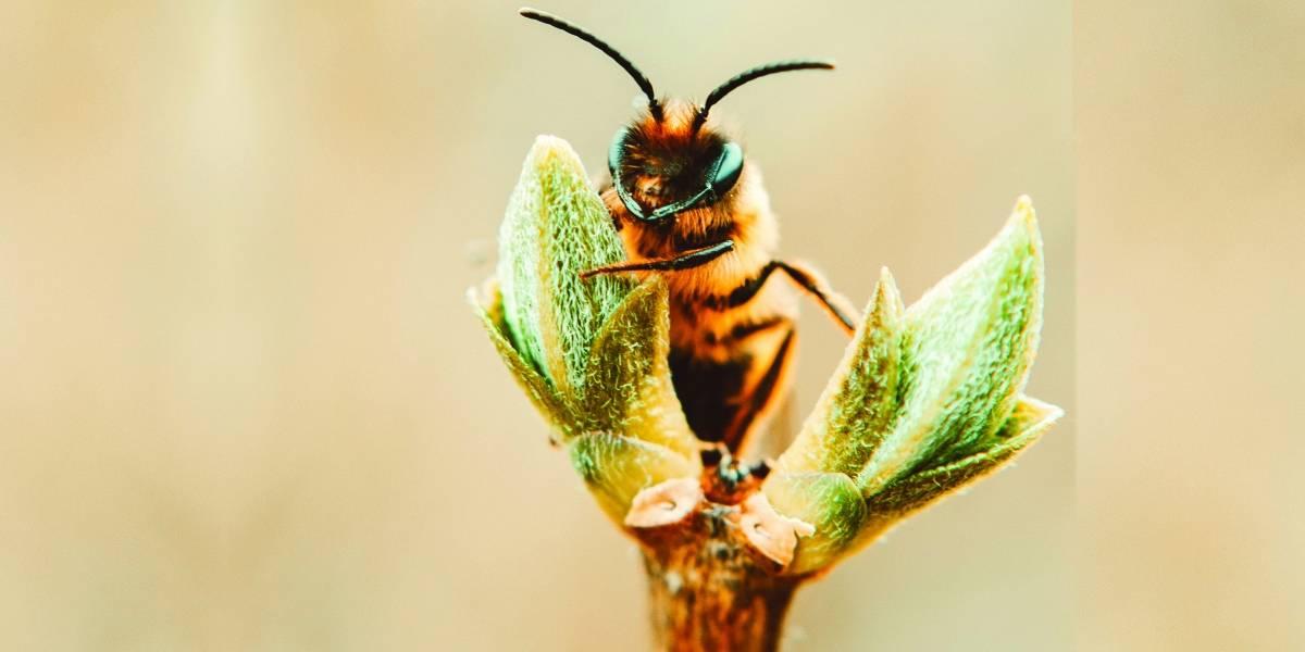 As abelhas estão ameaçadas; o que isso pode significar para a nossa existência?